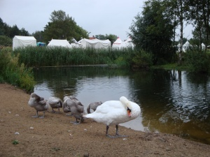 Early morning at Pensthorpe